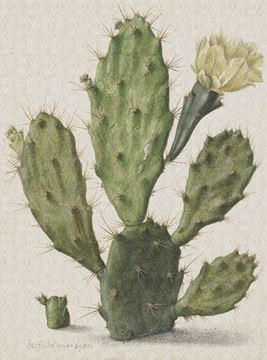 Dutch Painted Memories fotobehang Cactus 8013