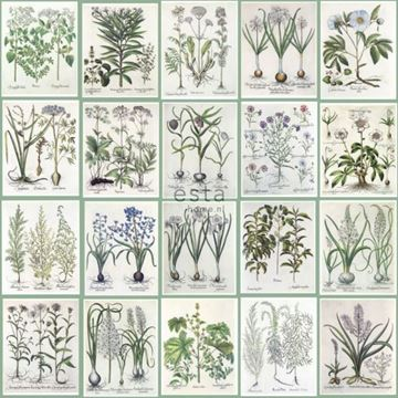 Esta Home WallpaperXXL Botanical illustration detail